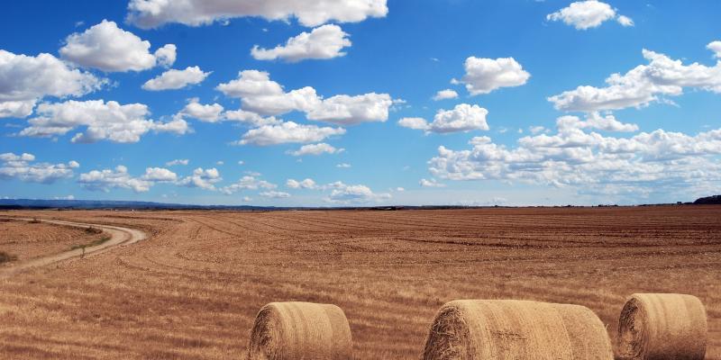 Składka zdrowotna rolników zależy od wielkości gospodarstwa