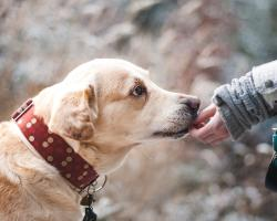 Dog therapy: therapy with the participation of dogs